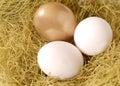 Um ovo dourado e dois ovos brancos em um ninho Foto de Stock