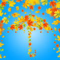 Umbrella from autumn leaves against blue sky colorful Royalty Free Stock Photos