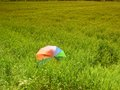 Umbrella in wheat field on windy sunny day Stock Photos
