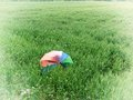 Umbrella in wheat field on windy sunny day Royalty Free Stock Photography