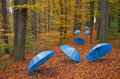 Umbrellas in the wood Royalty Free Stock Photo