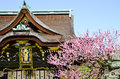 Ume Blossoms and Main Building in Kitano Tenmangu Shrine, the Tablet with Shrine`s name, Kyoto, Royalty Free Stock Photo