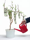 Un arbre du dollar Photo stock