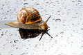 Un escargot sur une surface en verre Photo stock