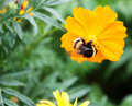 Un nectar potable d'abeille Photographie stock libre de droits