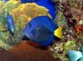 Un pesce di corallo nel Mar Rosso Fotografia Stock Libera da Diritti