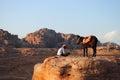 Un uomo ed il suo cammello nel petra giordania Immagine Stock Libera da Diritti