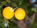 Una coppia le arance Fotografia Stock