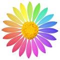 Una flor coloreada arco iris Imágenes de archivo libres de regalías