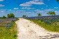 Una hermosa vista quebradiza de texas road rural solo en texas field blanketed grande con texas bluebonnets famoso Imagenes de archivo