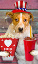 Uncle sam doggy with popcorn and drink Royalty Free Stock Images