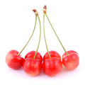 Uncommon red cherries Royalty Free Stock Photo