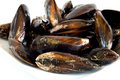 Uncooked mussels