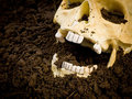 Uncovered Human Skull Royalty Free Stock Photo