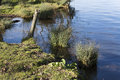 Uncultivated waterside of a ditch Stock Photography