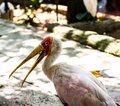 Undefined tropical bird