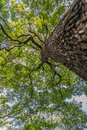 Under branch of big green tree in HDR style Royalty Free Stock Photo