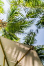 Under the shade with the cocunut trees relax in cool sea breeze your favorite book Stock Images
