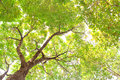 Under tree branch with green leaf view Royalty Free Stock Photo