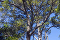 Under View of Tree Branches Against Blue Cloudy Sky Royalty Free Stock Photo