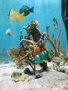 Under water marine life with tropical fish and colorful sea sponges fixed on coral caribbean sea Stock Photography