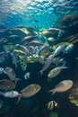 Under water siam ocean world aquarium bangkok thailand sea life Stock Photo