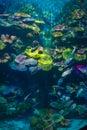 Under water siam ocean world aquarium bangkok thailand sea life Royalty Free Stock Images