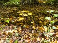 undergrowth in forest in sunny autumn day Royalty Free Stock Photo