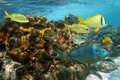 Undersea colors in a coral reef with colorful fish caribbean sea jamaica Royalty Free Stock Image