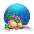 Undersea flora on the sandy bottom of the ocean Royalty Free Stock Photo