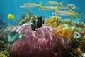 Undersea reef fish with beautiful coral colorful caribbean sea Stock Photography