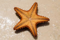 Underside of a red starfish the Stock Image