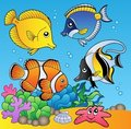 Underwater animals and fishes 2 Royalty Free Stock Photos