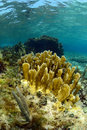 Underwater aquatic marine life and coral in ocean Stock Photos