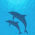 Underwater background with dolphins. Stock Photos
