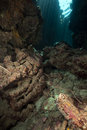 Underwater cave and sunrays in the Red Sea. Stock Photo