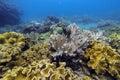 Underwater coral garden Royalty Free Stock Photo