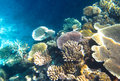 Underwater coral garden spectacular in fiji south pacific dappled sunlight lights up the varied colors and shapes of live Royalty Free Stock Photos