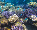 Underwater Coral Garden & Tropical Fish Royalty Free Stock Photo