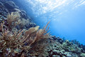 Underwater coral reef off the coast of bonair Royalty Free Stock Photos