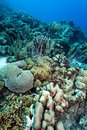 Underwater coral reef off the coast of bonaire Royalty Free Stock Photo