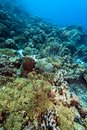 Underwater coral reef off the coast of bonaire Royalty Free Stock Photos