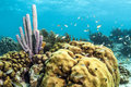 Underwater coral reef purple tube sponge Royalty Free Stock Photo