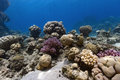 Underwater Coral Reef Scene Royalty Free Stock Photo