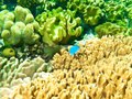 Underwater corals and sponges Royalty Free Stock Photo