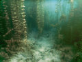 Underwater flora. Underwater Plants rivers, lakes, pond. Royalty Free Stock Photo