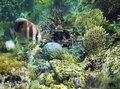 Underwater Garden, Great Barrier Reef, Australia Royalty Free Stock Photo