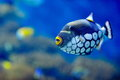 Underwater image of tropical fish Royalty Free Stock Photo