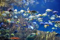 Underwater image of tropical fishes colorful Royalty Free Stock Photos