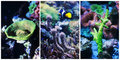 Underwater landscape collage of different corals and Stock Image